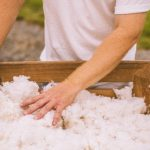 Man wearing a white shirt with his hand in a bin of cotton