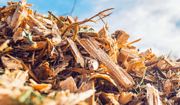 Pile of free wood chips from Leaf & Limb