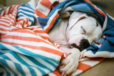 Dog snuggled in the striped Resilience Blanket from Thread Talk