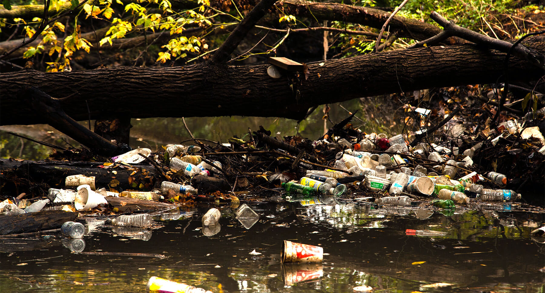 Litter piling up in a river